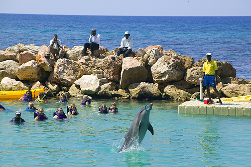 Dolphin Cove in Jamaica